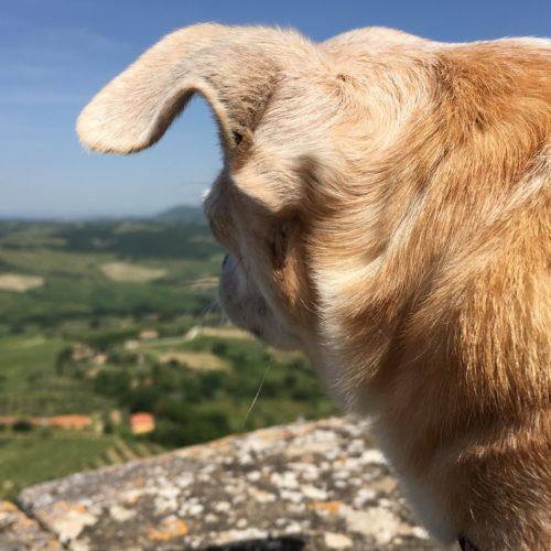 Siena- Tuscan Road Trip