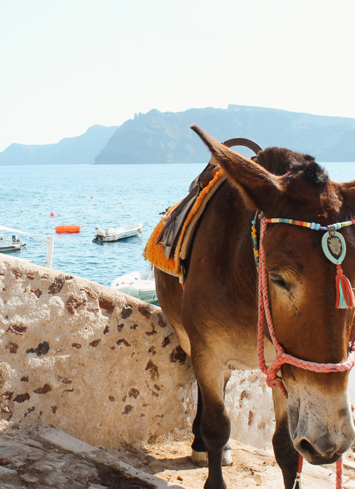 Attempting to Ride a Donkey in Santorini