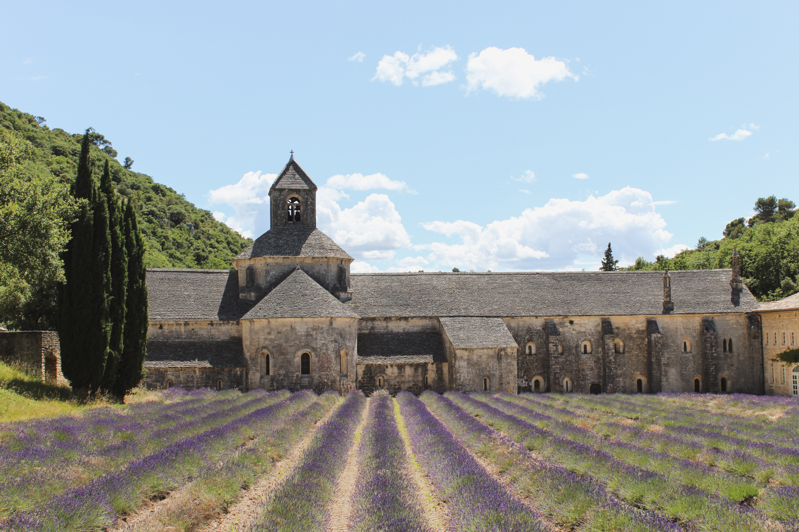Lavender Fields in Provence. Senanque Abbey.