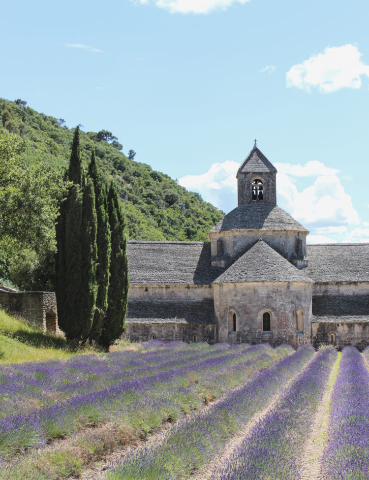 In Search of Lavender Fields in Provence