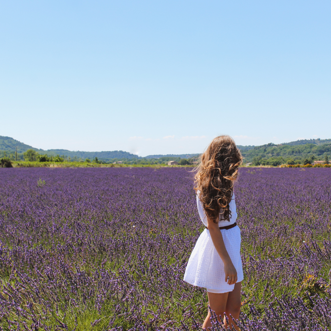 Lavender Fields in Provence -7
