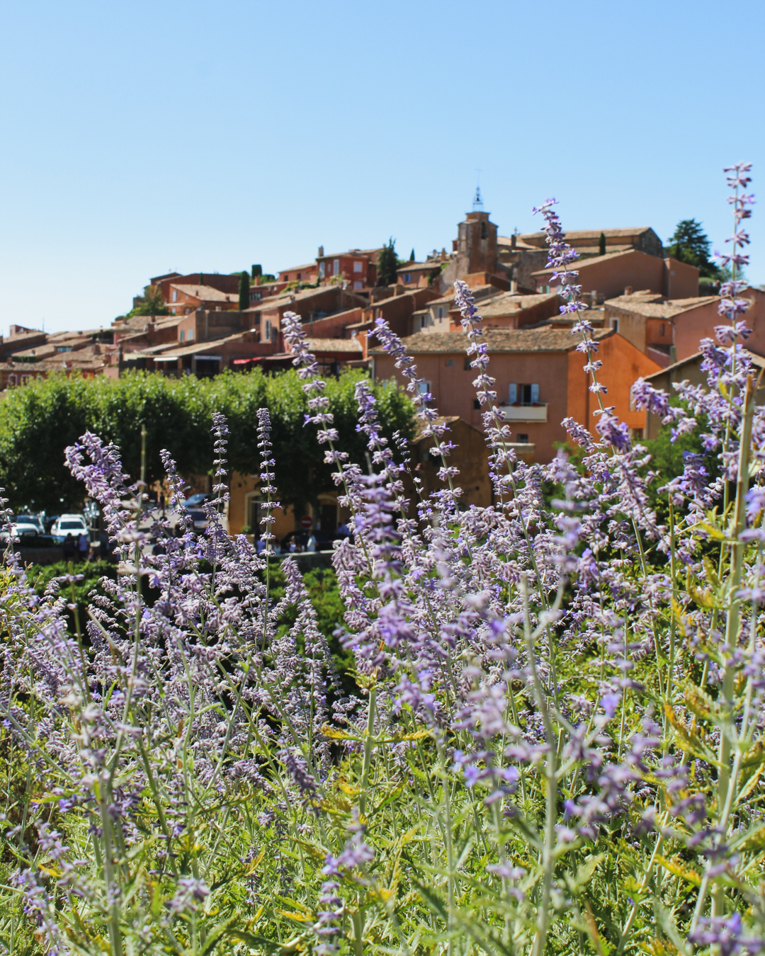 Lavender Fields in Provence. Roussillon.