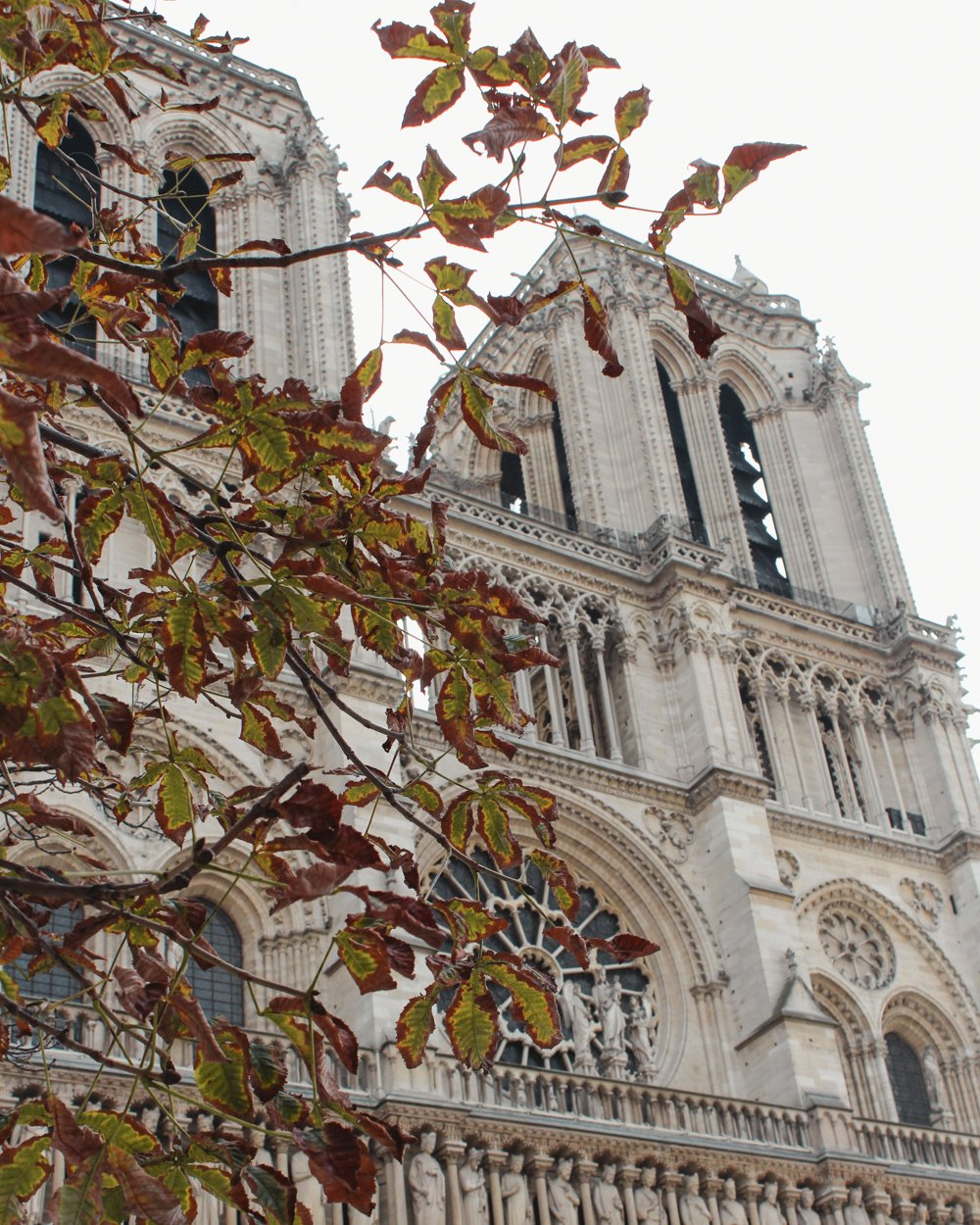 Paris in the Fall- Notre Dame