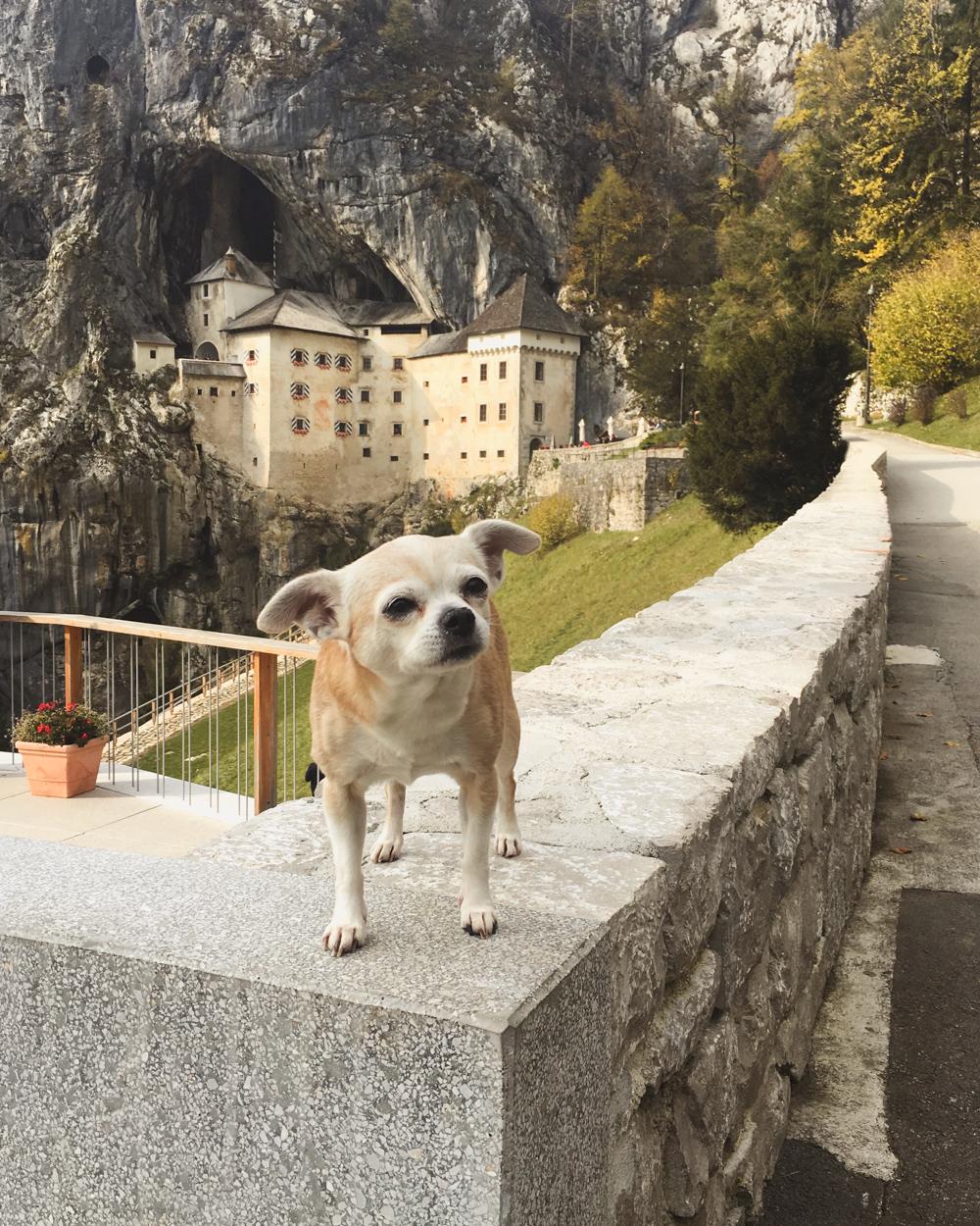 Slovenia Road Trip- Predjama Castle