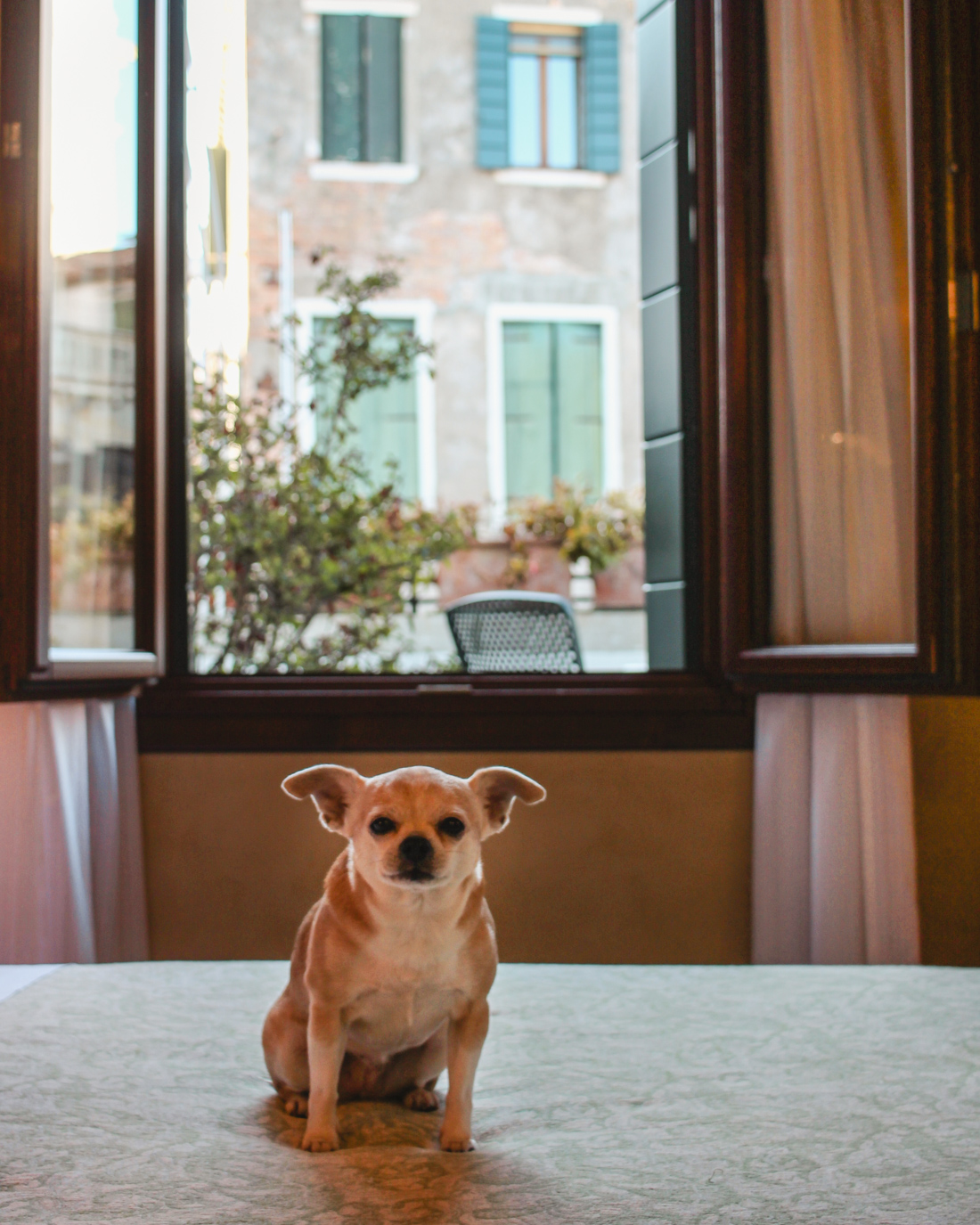 Hotels in Italy- Dog friendly