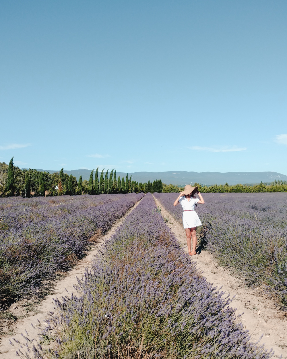 Provence Travel Itinerary Lavender Fields