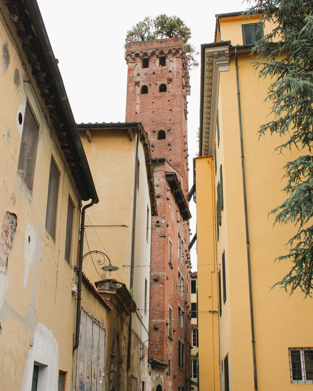 Torre Guinigi | Travel Guide to Lucca
