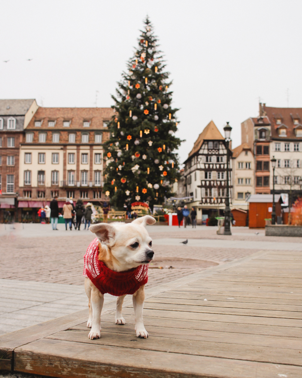 Dog in Strasbourg, France | Capital of Christmas