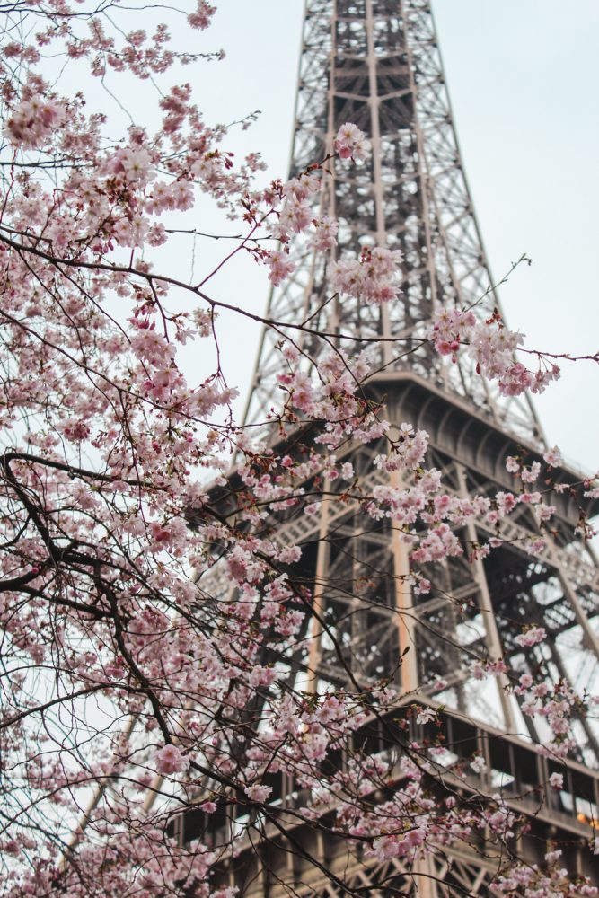 Spring Blossoms in Paris | Eiffel Tower