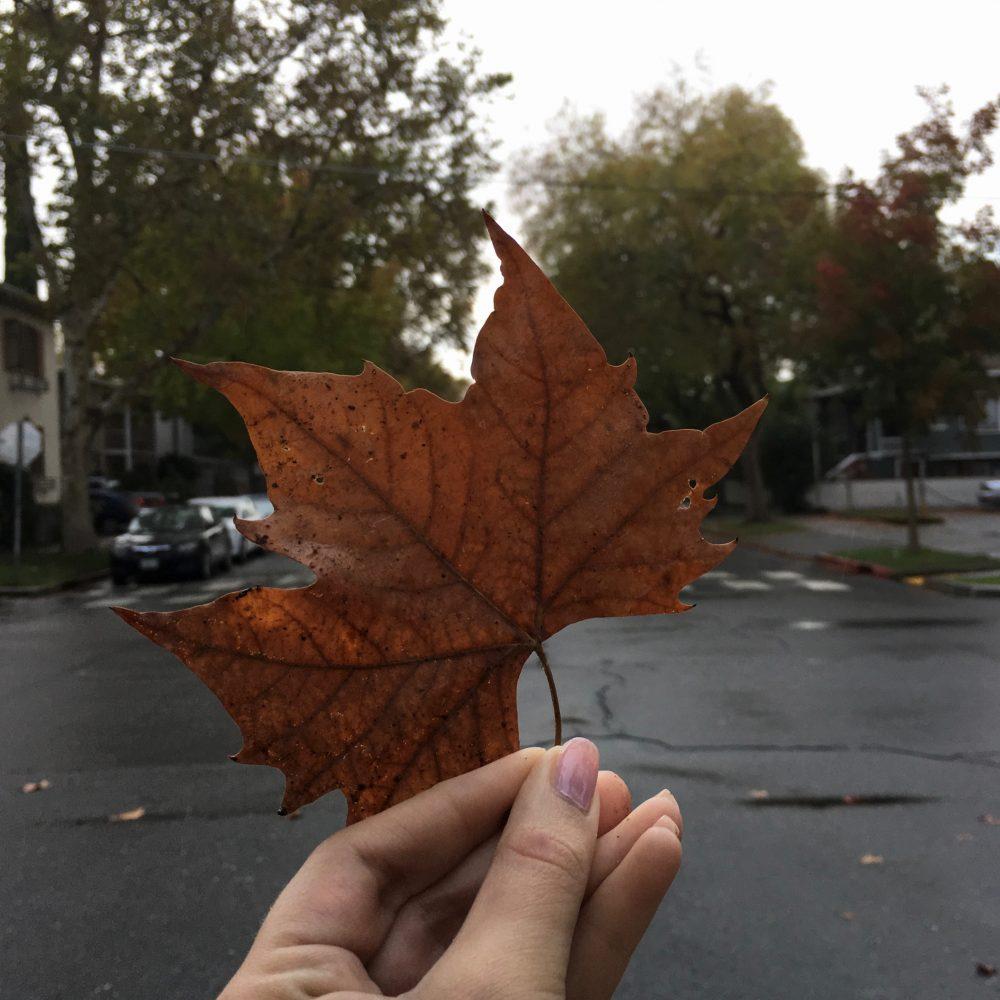 Sacramento. Fall Leaves
